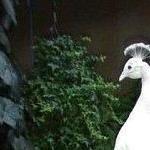 Profile picture of leobinh